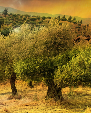 LOLIVE - Skoura Olive Oil Mill